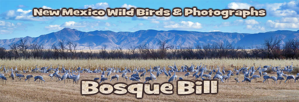 Bosque Bill's Backyard includes diverse natural areas for birding, biking, hiking, photography such as this lovely view of the Sandia Mountains from the Rio Grande Nature Center in Albuquerque.