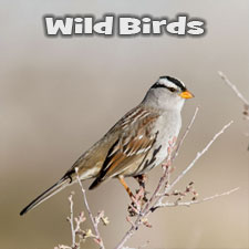 NM Wildbirds
