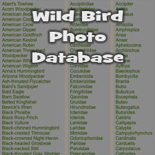 Bird Photo Database