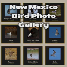 Bird Photo Gallery