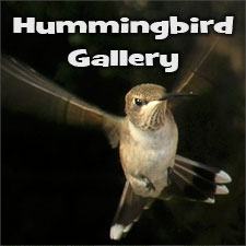 Hummingbird Gallery